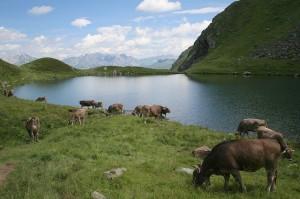 Ausztriai kirándulások