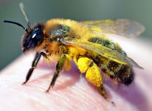 Méhpempő + méhkenyér a jó egészségért
